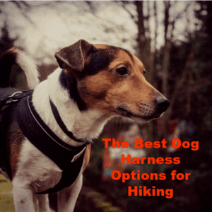 The Best Dog Harness Options for Hiking