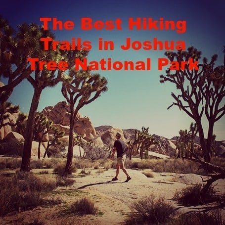 The Best Hiking Trails in Joshua Tree National Park