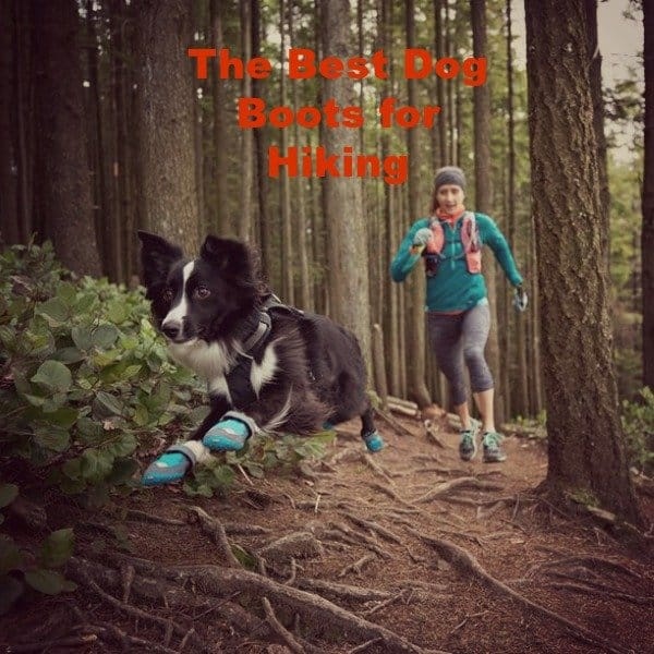 The Best Dog Boots for Hiking That You Need to Know!