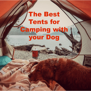 5 Best Tents for Camping with your Dog