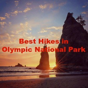 The Best Hikes in Olympic National Park – A Hiker's Guide